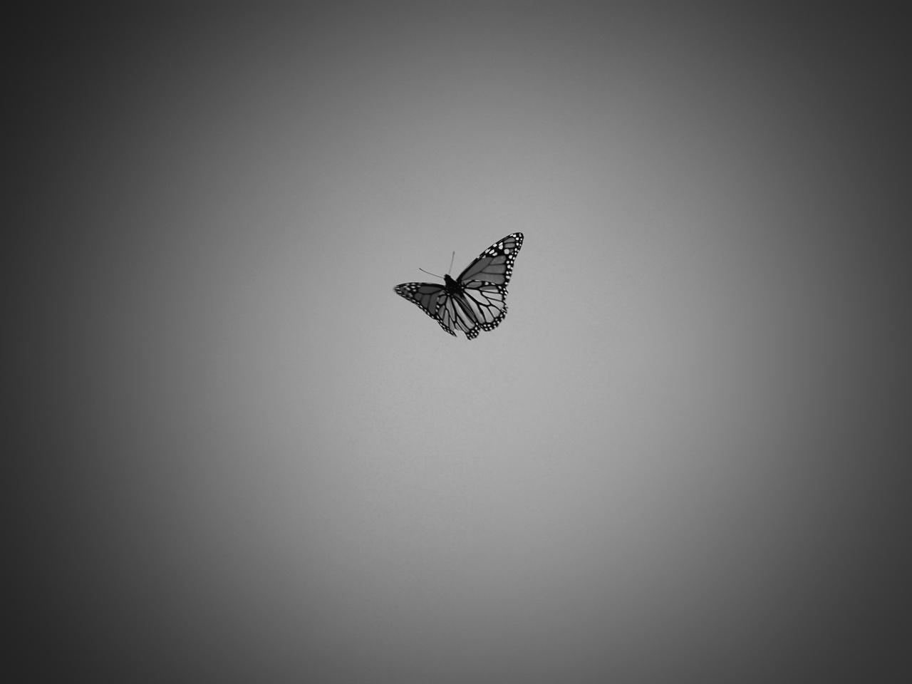 butterfly - 1 (2)